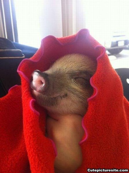 Pigs in a Blanket | Andelino's Weblog