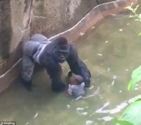 Gorilla Lives Matter 02