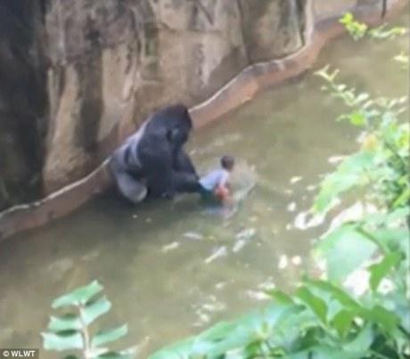 Gorilla Lives Matter 03