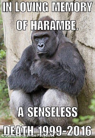 Gorilla Lives Matter 05