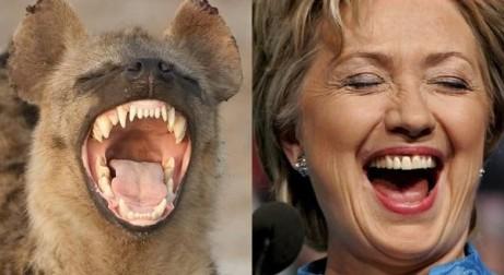 Laughing Hyena 01