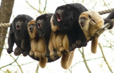 Screaming Monkeys 00