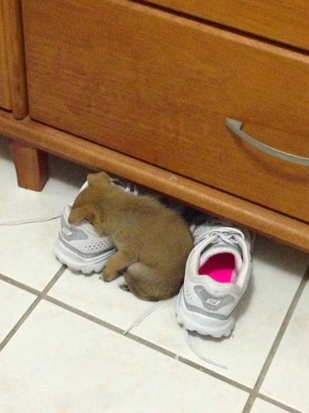 dog-tired-03