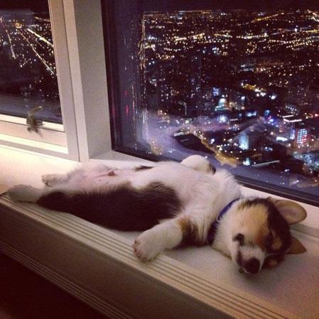 dog-tired-06