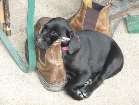 dog-tired-12
