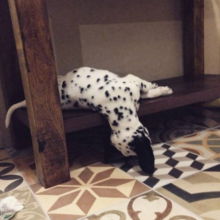dog-tired-13