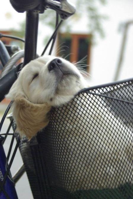 dog-tired-17