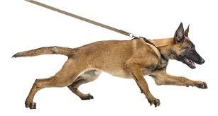 the-leash-02