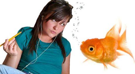 memory-of-a-goldfish-02